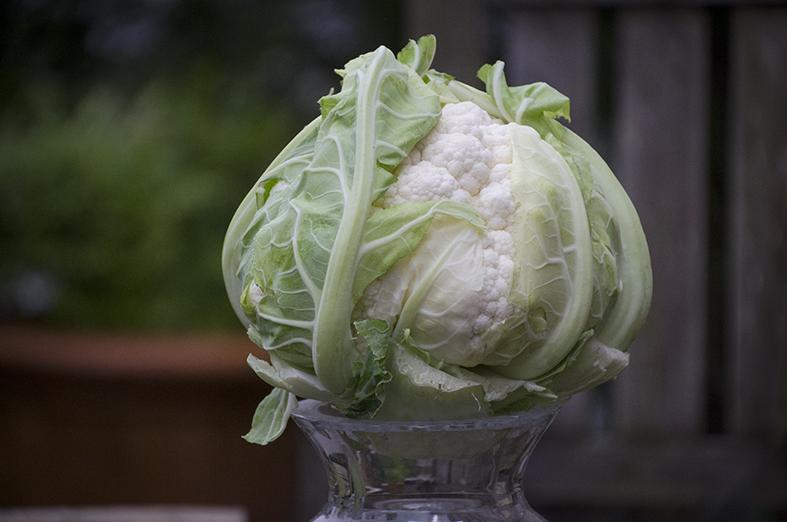 Kohl and the Gang – 5 immunstärkende Superfoods für den Winter