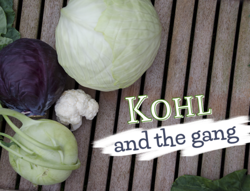 Kohl and the gang – 7 starke Winter-Superfoods