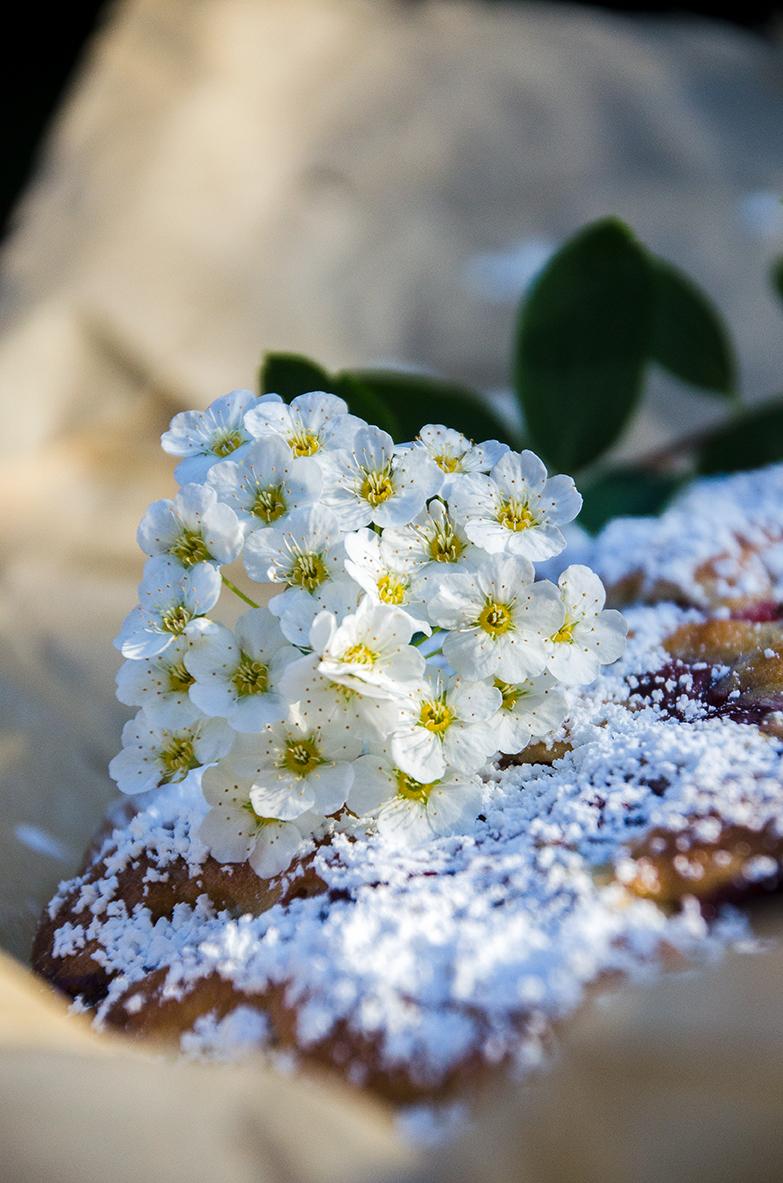 Sauerkirschkuchenblüten